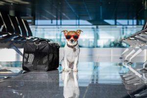 pet-travel