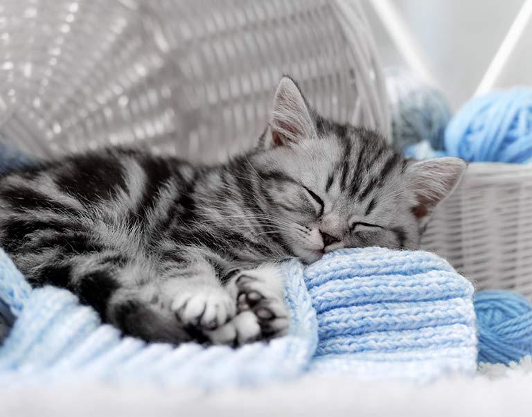 Kitten Wellness Care at Animal Medical Center at Fort Sheridan