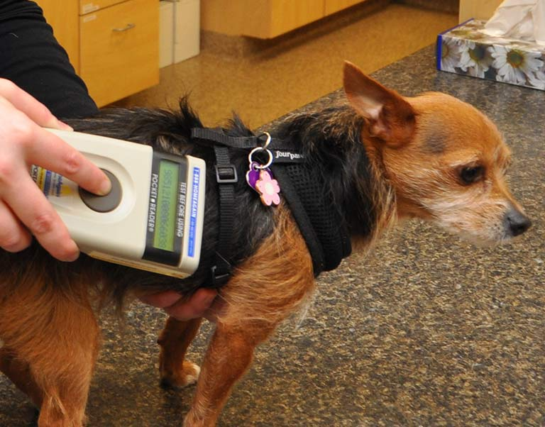 Canine Microchipping in Fort Sheridan, IL